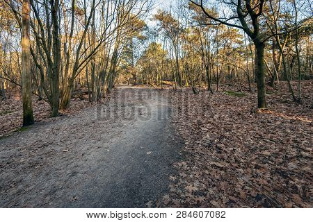 Curved Sandy Path In A Shaded Part Of A Forest In Autumn Shades