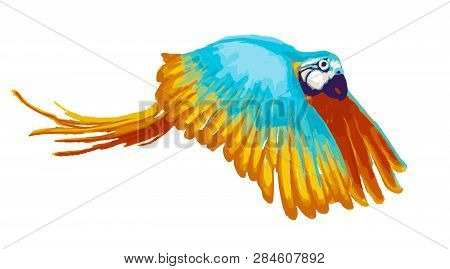 Bright Flying Parrot, Cartoon Animal On White