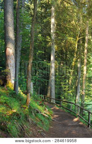 Path Through Coniferous Forest In Dappled Light. Wooden Fence. Beautiful Summer Scenery