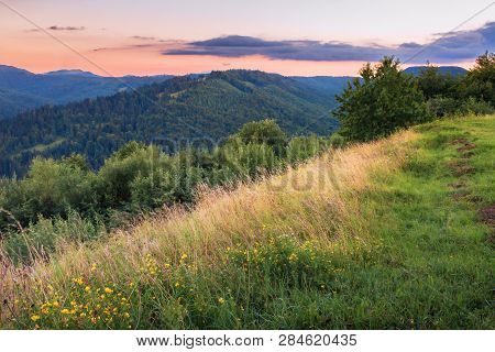Grassy Slope On A Hill At Dawn. Beautiful Summer Landscape. Forested Hill In The Distance. Reddish S