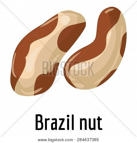 Brazil Nut Icon. Cartoon Of Brazil Nut Vector Icon For Web Design Isolated On White Background