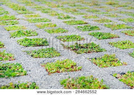 Eco Friendly Parking In Modern City. Permeable Pavement With Grass Growing Through It. Environmental