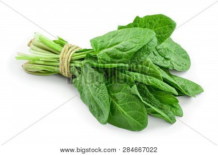 Fresh Spinach Bundle Isolated On White Background