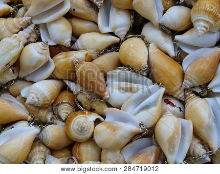 Key Chains Made Of Clam Shells. Mussel
