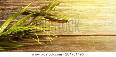 Closeup View Of Cross Shape Of Palm Leaf And Palm Branches With Ray In Wooden Background. Palm Sunda