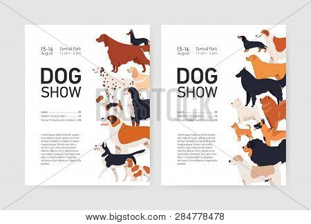 Bundle Of Flyer Or Placard Templates For Conformation Dog Show With Adorable Doggies Of Different Br