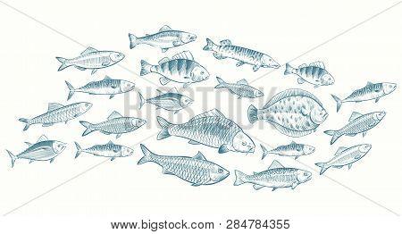 Hand Sketched Fish Vector Illustration. Underwater Life Banner For Restaurant Menu. Underwater Seafo