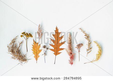 Set of dried plants collected in the meadow. Symmetrical composition, flat lay styling. Creative idea for autumn still life. Art photography concept. Isolated over white background, copy space.
