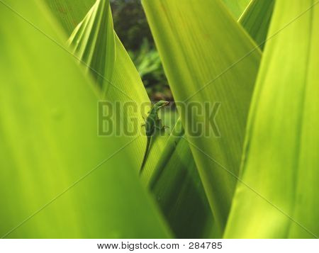 Green Lizard In Leaves