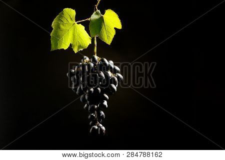 Bunch Of Red Grapes Hang On Black Background