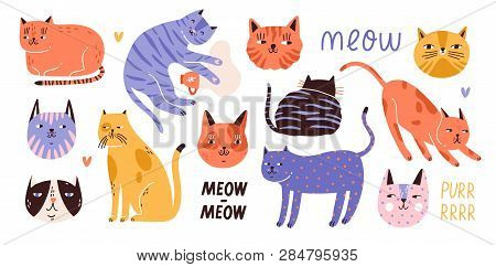 Collection Of Cute Funny Cats Of Various Breeds Lying, Sitting, Stretching Itself, Playing, Sleeping