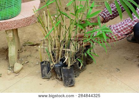 Old Man Holding The Group Of Young Bamboo In Plastic Bag On Soil Ground