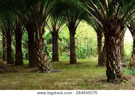 The Green  Palm Tree And Day Light At The Farm Land
