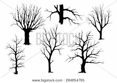 Trees Without Leaves, Hand Drawing Silhouette. Trunks And Branches Of Different Types Of Trees, Vect
