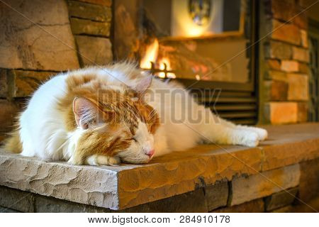 A Long Hair, Orange And White Maine Coon Cat Sleeps On A Hearth In Front Of A Cozy Gas Fireplace Wit