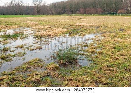 Large Puddle In The Grass After The Rain. The Photo Was Taken On A Cloudy Day In The Dutch Winter Se