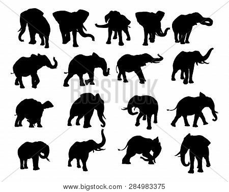 A Set Of Elephant Animal Silhouettes In Various Positions
