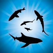 vector silhouettes of sharks underwater and sunlight. EPS10 poster