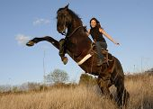 rearing black stallion and happy young woman in a field poster