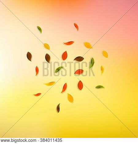 Falling Autumn Leaves. Red, Yellow, Green, Brown Random Leaves Flying. Explosion Colorful Foliage On