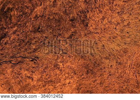 Brown Background. Natural Wood Texture. Abstract Background.