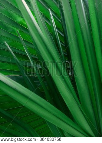 Green Leaf Or Leaf Background,close Up Green Leaf,tree Leaves Nature Background. Leaf Of Design. Fre