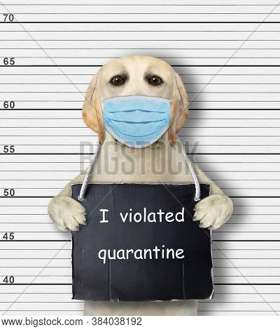 A Dog In A Protection Mask Was Arrested. He Has A Sign Around Its Neck That Says I Violated Quaranti