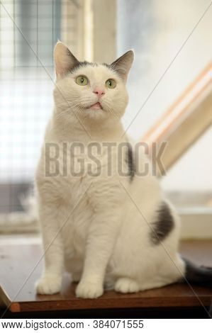 White With Black Spots Cat Close Up