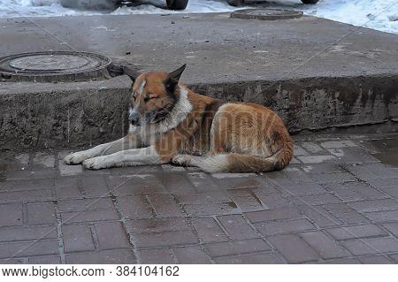 A Homeless Dog On A Wintery Street