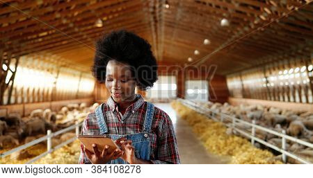 Young African American Pretty Woman Using Tablet Device And Walking In Farm Stable. Female Farmer Ta