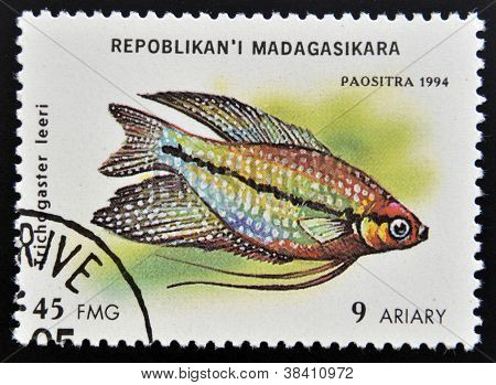 MADAGASCAR - CIRCA 1994: stamp printed in Madagascar dedicated to fish shows trichogaster leeri circ