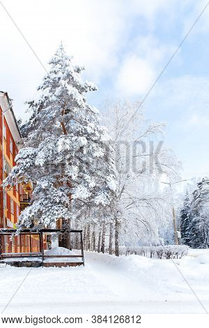 Snow-covered Trees On A City Boulevard, Winter Day, Beautiful Seasonal Scene, Frosty Trees Covered W