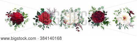 Burgundy Red Rose Flowers, White Ivory Peony, Carnation Vector Design Wedding Bouquets. Eucalyptus,