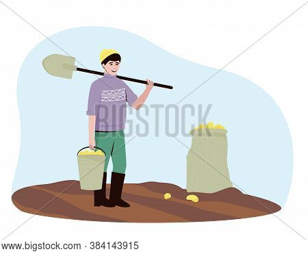 A Farmer Harvests Potato Tubers In The Field. There Are Potatoes In The Bucket And Bag. A Man Stands
