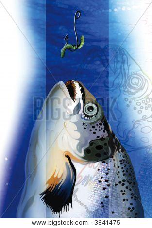 Fish And Bite