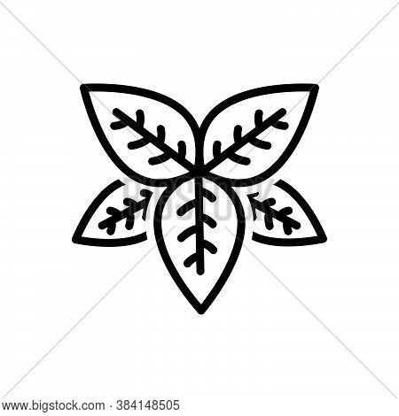 Black Line Icon For Basil  Tulsi Lamiaceae Thyme Greenery Sweet-basil Condiment Spice Flavor Ingredi
