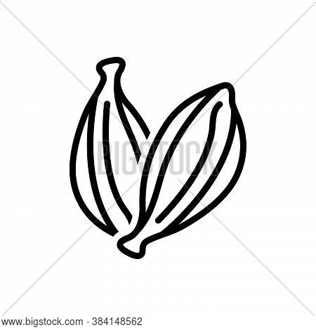 Black Line Icon For Black-cardamom Black Cardamom Seeds Cardamum Aroma Condiment Spice Flavor Ingred