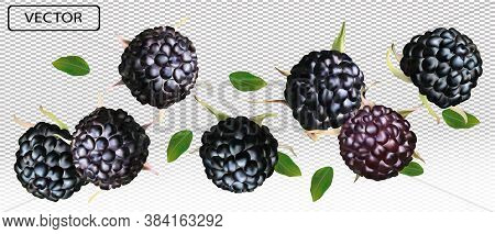 Blackberry From Different Angles. Whole Black Raspberry With Green Leaf On Transparent Background. F