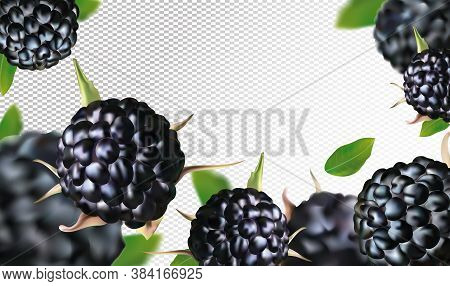 Fresh Blackberry From Different Angles. Black Raspberry Berry Rich In Vitamins. Blackberry Whole Wit