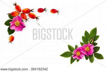 Fresh Red Fruits And Pink Flowers Dog Rose, Briar (rosa Rubiginosa, Rose Hips) With Leaves On A Whit