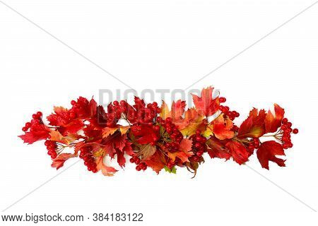 Red Autumnal Leaves And Berries Viburnum ( Viburnum Opulus ) On A White Background With Space For Te