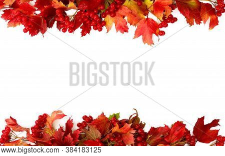 Frame Of Red Autumnal Leaves And Berries Viburnum ( Viburnum Opulus ) On A White Background With Spa