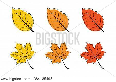 Leaves. Autumn Leaf Vector Icons. Leaves Maple. Leaf Different Color. Autumn Leaves Maple. Vector Il