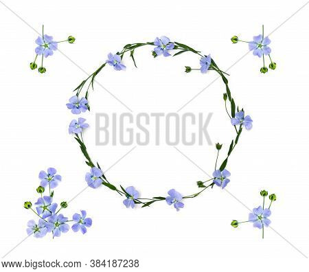 Wreath Of Flowers And Capsules With Seed Flax ( Linum Usitatissimum, Common Flax Or Linseed ) On A W