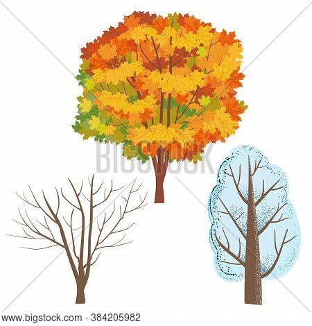 A Set Of Trees. Autumn Maple With Orange And Yellow Leaves. Winter Tree In The Snow. A Bare Tree Tru