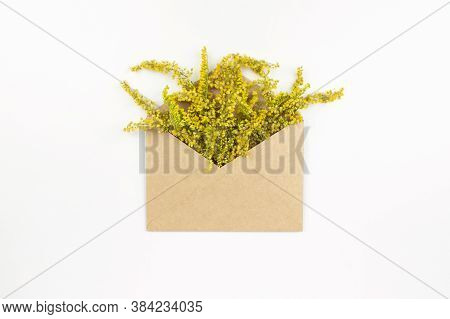 Yellow Mimose Bouquet In Envelope Flat Lay On White Background Top View, Copy Space. Beautiful Bloss