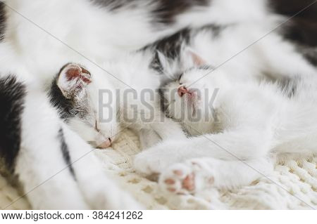 Adorable Kittens Sleeping With Cat On Soft Bed, Cute Furry Family. Mother Cat Resting With Two Littl