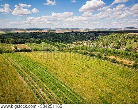Vineyard With White Wine, Landscape Scene, Dramatic Cloud