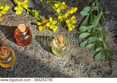 Bottles Of Essential Oil With Blooming Common Rue, Or Ruta Graveolens Plant