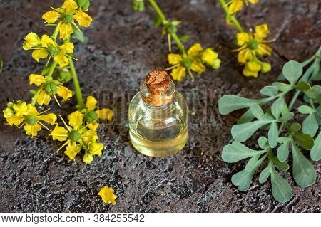 A Bottle Of Essential Oil With Fresh Blooming Common Rue, Or Ruta Graveolens Plant